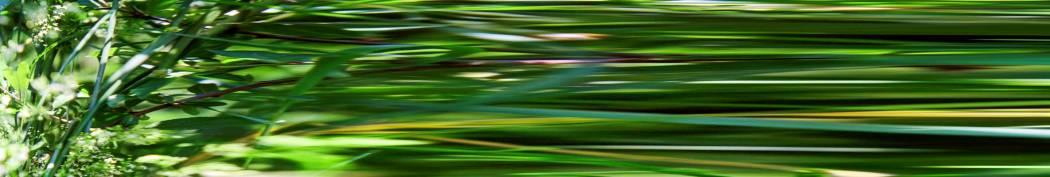 01-09-01 Beschleunigtes Gebüsch