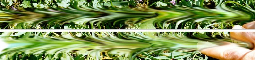 01-35-01 Durchstrichenes Gras