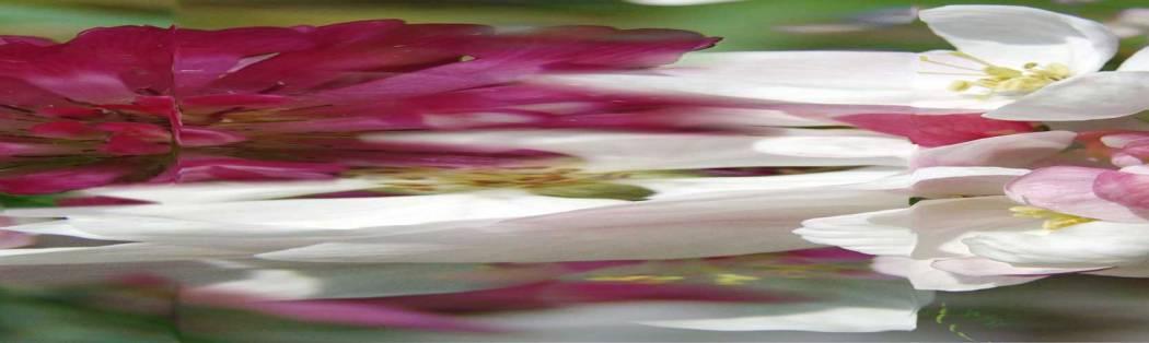 01-73-03 Apfelblüte