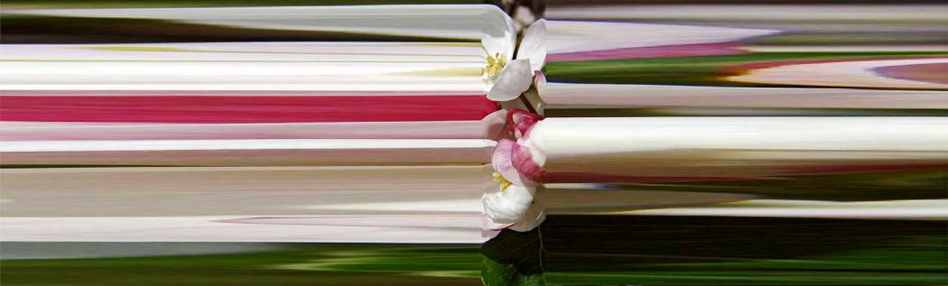 01-73-01 Apfelblüte