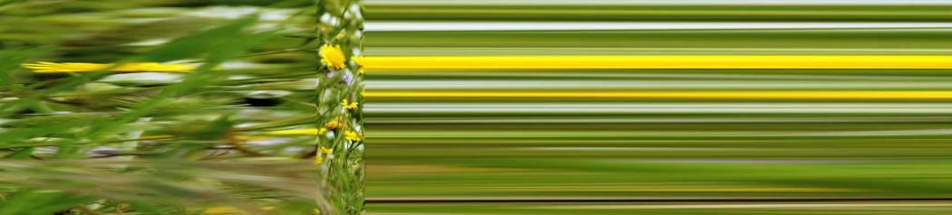 01-79-01 Beschleunigtes Gras