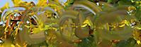 03-18-01 Herbstmalerei